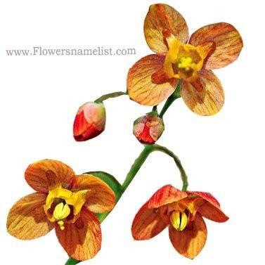 Epimedium x warleyense Orange Queen