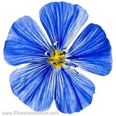 Flax Wild Blue