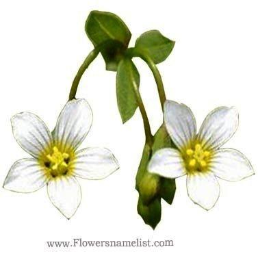 Flax white