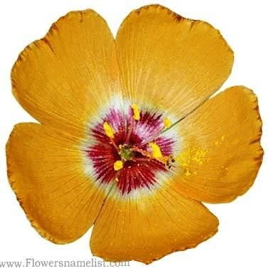Flax yellow