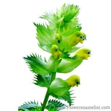 Fleur flower