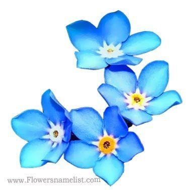 Forget Me Not, Blue Flowers