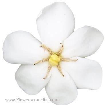Gardenia Daisy Hardy
