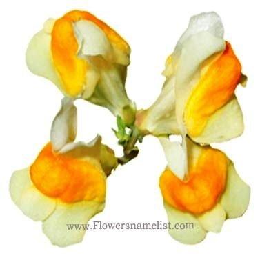 Linaria vulgaris edible