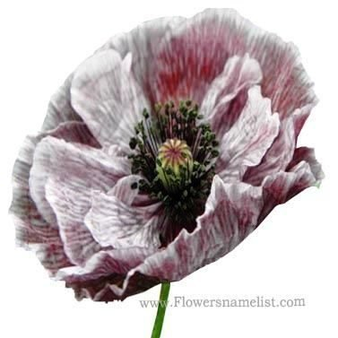 Shirley Poppy grey and pink