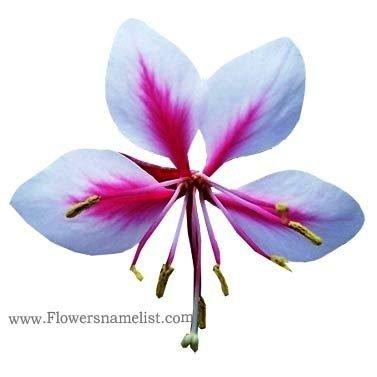 Wand Flower