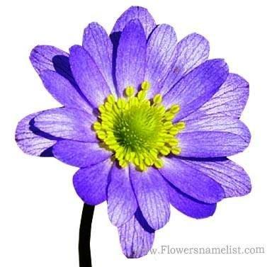 Wind Purple Flower