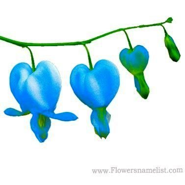 bleeding heart blue