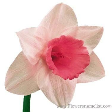 Flowers that start with d flowers name list daffodil pink flower mightylinksfo Images