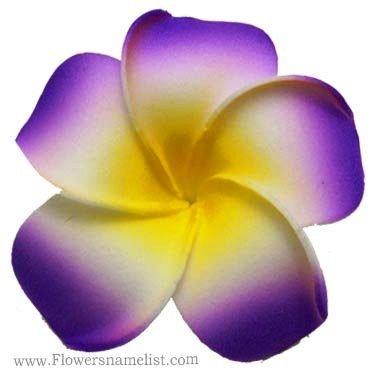 frangipani purple flower