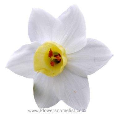 mayflower flower white