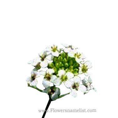 flowers that start with n  flowers name list, Beautiful flower