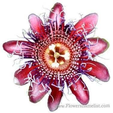 passion Gumpast flower