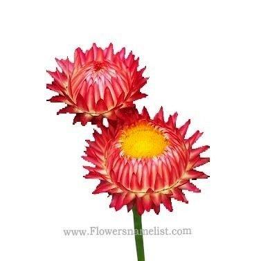 straw-domestic-flower